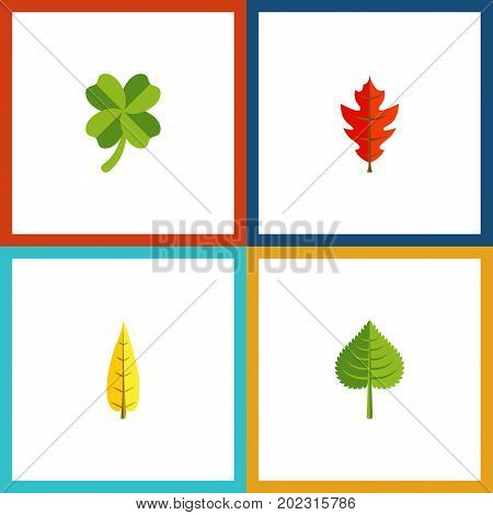 Flat Icon Foliage Set Of Hickory, Frond, Maple And Other Vector Objects