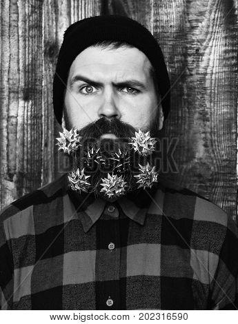 Bearded Man, Brutal Caucasian Serious Hipster With Gift Decoration Stars