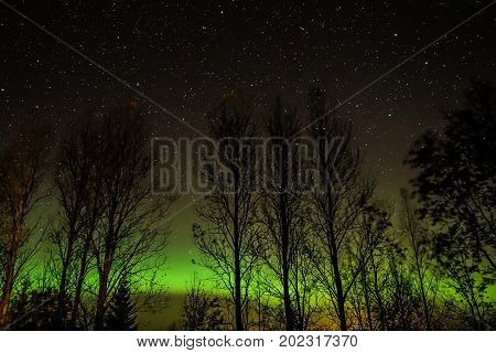 Northern lights and autumn trees in Finland