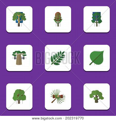 Flat Icon Nature Set Of Hickory, Baobab, Wood And Other Vector Objects