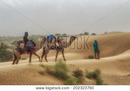 Jaisalmer India - September 23 2013: Cameleer at Sam Sand Dune Thar Desert India. Camel riding activity is important income source for desert villagers.