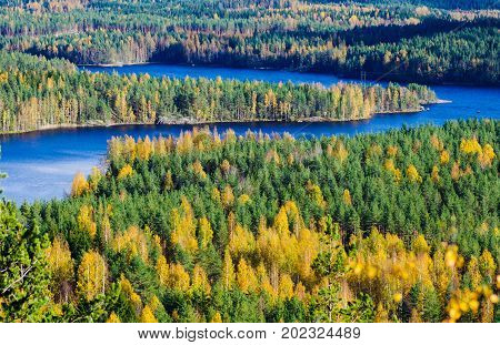 Colorful forest background with lakes in Finland