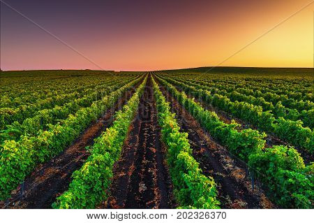 A Beautiful Sunset Over Vineyard In Europe