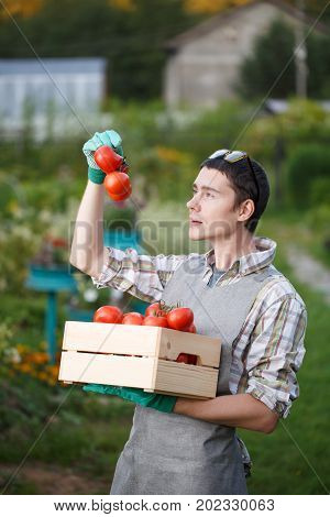 Young agronomist wearing rubber gloves with box tomato on street during day