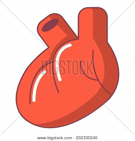 Heart organ icon. Cartoon illustration of heart organ vector icon for web design isolated on white background