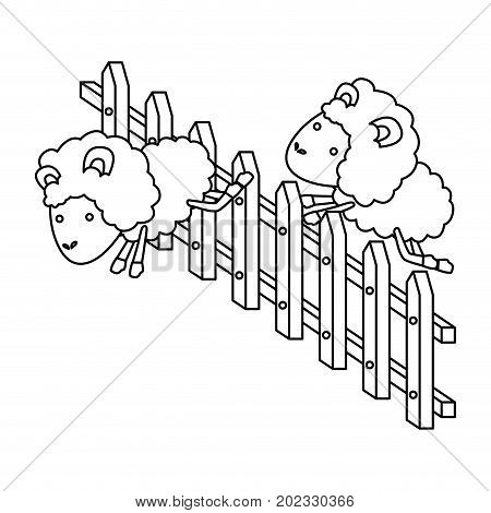 sheep animal couple jumping a wooden fence in sketch silhouette on white background vector illustration