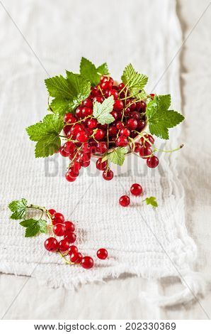 Red Currants Over White Background