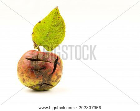 Cracked and damaged red apple on a white background