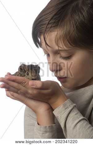 little girl and her pet a guinea pig - white background
