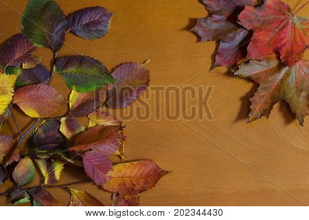 Colorful autumn leaves on wooden background with copy space