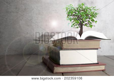 Tree growing from a stack of books