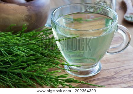 Horsetail Tea With Fresh Horsetail Twigs