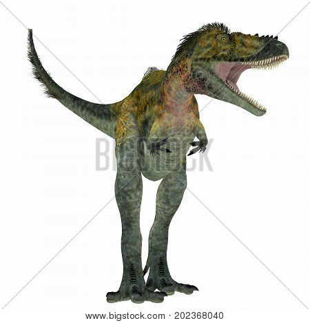 Alioramus Dinosaur on White 3d illustration - Alioramus was a carnivorous theropod dinosaur that lived in Asia in the Cretaceous Period.