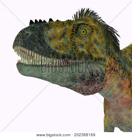 Alioramus Dinosaur Head 3d illustration - Alioramus was a carnivorous theropod dinosaur that lived in Asia in the Cretaceous Period.