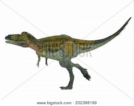 Alioramus Dinosaur Side Profile 3d illustration - Alioramus was a carnivorous theropod dinosaur that lived in Asia in the Cretaceous Period.
