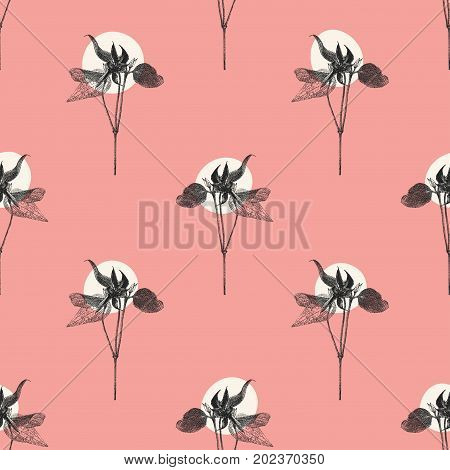 Vector seamless pattern with Clematis flower isolated on pink background. Graphic drawing pointillism technique. Botanical natural collection. Floral illustration drawn by hand