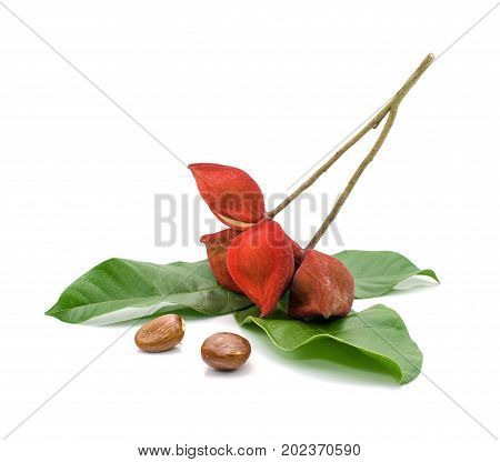 chestnuts and leaf isolate on white background