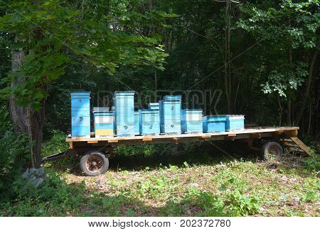 Relocating Bees. Langstroth beehives mounted on a single axle utility trailer. Beehive platform. Apiculture beekeeping