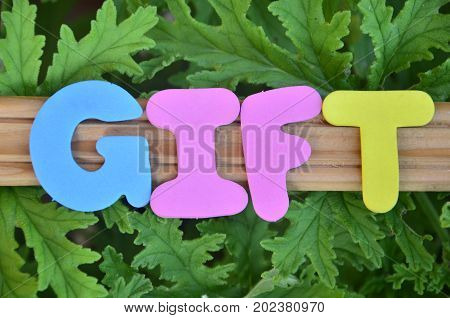 word gift on a  abstract  green background
