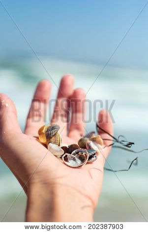 Small seashells and seaweed in a woman's hand near the sea on a day of faith for the background.