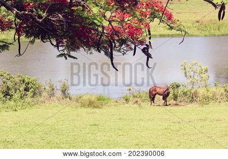 Paisagem com um cavalo na beira do rio