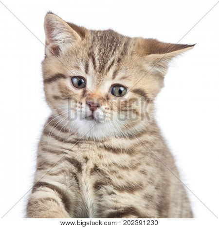 funny confused cat portrait
