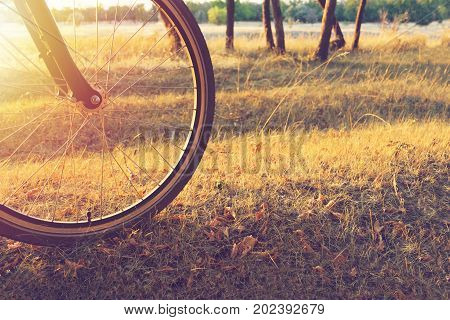 Walk On A Bike In The Autumn Forest. The Sun Shines Through The Wheel Of A Bicycle In The Forest