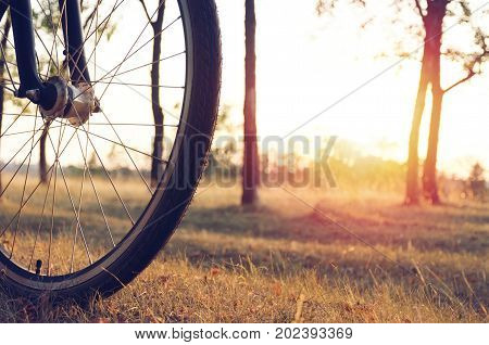 Wheel Of A Bicycle Is Lit By The Setting Sun Against The Background Of The Autumn Forest. Autumn Wal