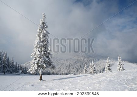 Christmas landscape with fir tree in the snow. Beautiful clouds and mountain peak. Carpathians, Ukraine, Europe