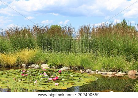 Tranquil Water Grass And Blooming Flowers Landscape