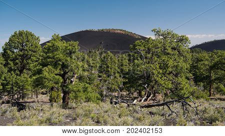 A black lava cinder cone in Sunset Crater Volcano National Monument Arizona USA