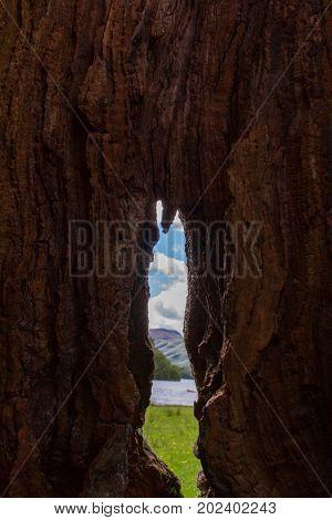 Lake shore view through a hollow tree trunk in Keswick Lake District UK