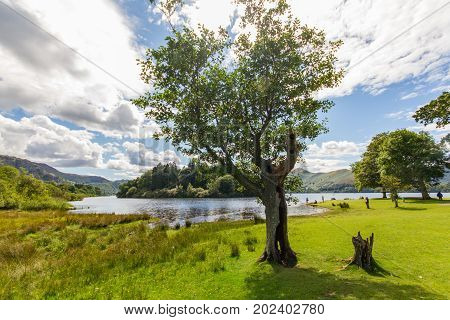 Idyllic scene of tree woman and dog on the shore of Lake Derwent Water in Cumbria UK
