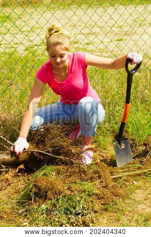 Woman Remove Tree From Backyard, Digging Soil With Shovel
