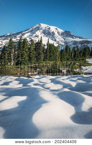 Mount Rainier with a snow and trees in the foreground during July