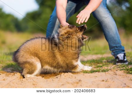 picture of a man who plays with an elo puppy in a sand pit