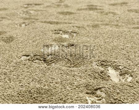 blurry Water drops marks of tropical rain on white sand beach closeup