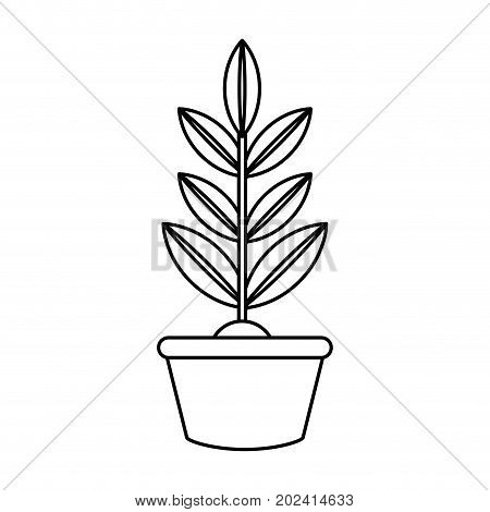 uncolored plant over white  background vector illustration