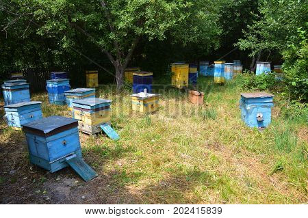 Cozy Colorful Beehives for Honey Bee Raw Linden Honey. Apiculture beekeeping.