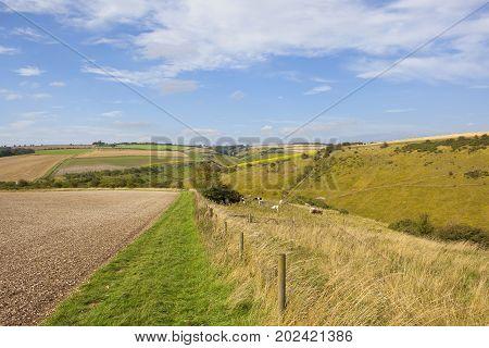 Bridleway And Livestock