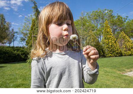 little child with grey shirt make a wish blowing dandelion plant holding in her hand in green park