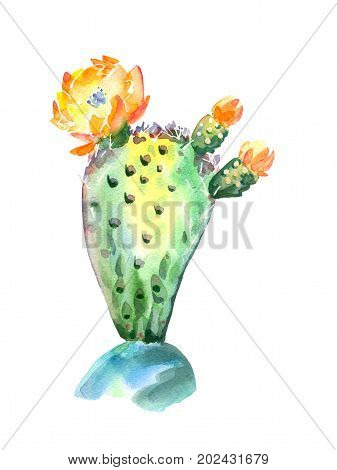 Watercolor flowering cactus plant isolated on white background - Yellow flowers on a green cactus