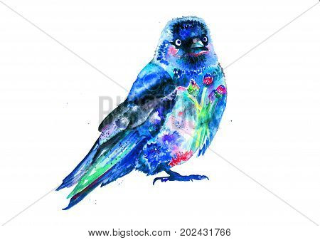 Watercolor flowering western jackdaw isolated on white background - Crow - Hand drow