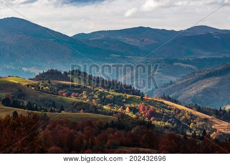 agricultural fields on hills. yellow and red foliage on trees in autumn time. beautiful rural landscape at sunset
