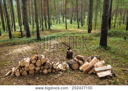 The lumberjack chopped the tree trunks for firewood with an axe in forest. The texture of cut wood. Hiking fuel fuel for camping. Natural chopped wood.