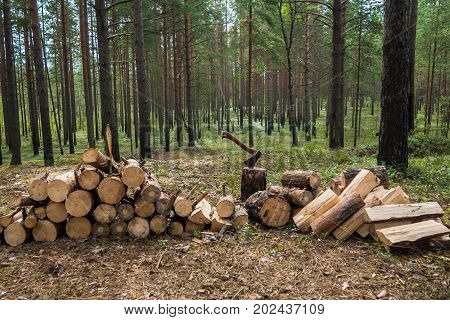 Llumberjack chopped the tree trunks for firewood with an axe. The texture of cut wood. Hiking fuel fuel for camping.  Natural chopped wood.