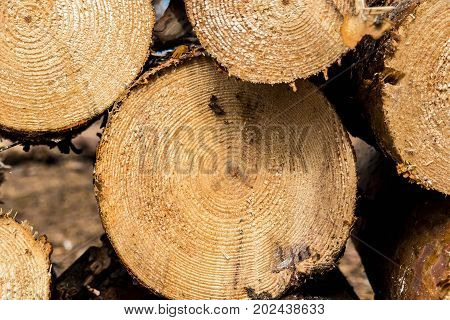 The lumberjack chopped the tree trunks. The texture of cut wood. Hiking fuel for camping. Natural chopped wood.