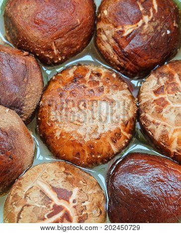 Fresh Shiitake Mushrooms or Lentinula Edodes Mushrooms in A Water High in Pantothenic Acid B5 Riboflavin B2 Niacin B3 Vitamin B6 and Minerals.