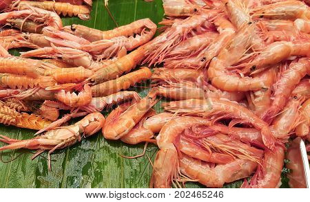 group of shrimps ready to be grilled