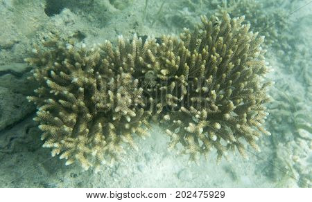 Acropora coral view in the Indonesia sea